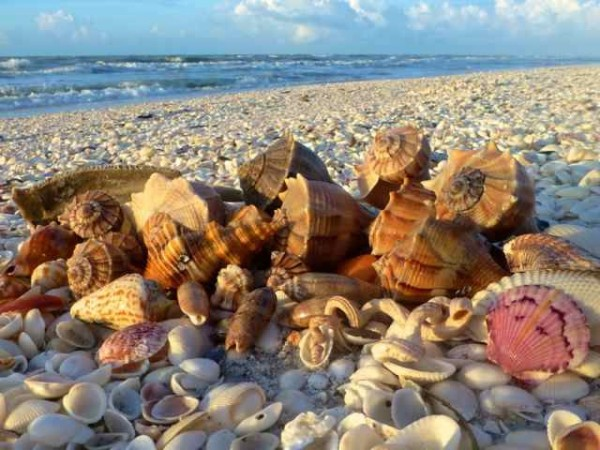 Sanibel Island seashells