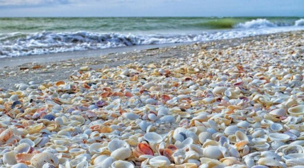 beaches of seashells